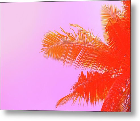 Orange Color Metal Print featuring the photograph Palm Tree On Sky Background. Palm Leaf by Slavadubrovin
