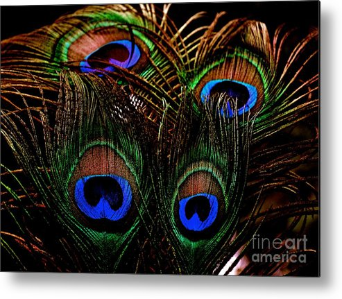 Peacock Metal Print featuring the photograph Peacock Eye Feathers by Lisa Telquist