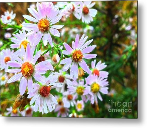 Pink Daisies Flowers Metal Print featuring the photograph Pink Daisies Flowers by Rose Wang