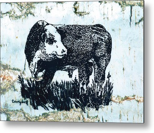 Polled Hereford Bull Metal Print featuring the photograph Polled Hereford Bull 26 by Larry Campbell