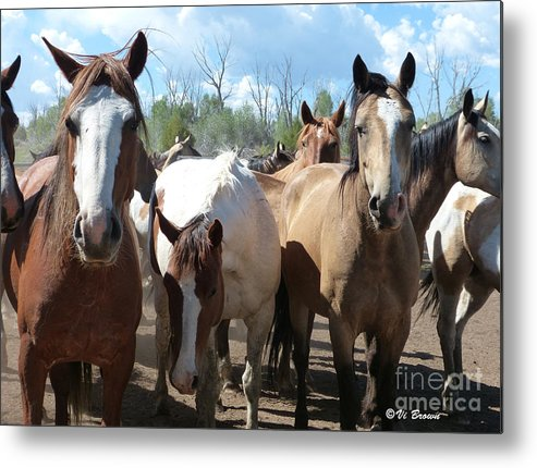 Real Close Metal Print featuring the photograph Real Close by Vi Brown