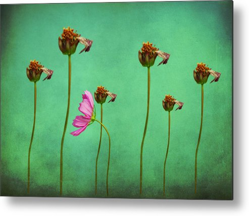 Seven Stems Metal Print featuring the digital art Seven Stems by David Dehner