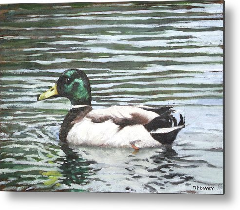 Mallard Metal Print featuring the painting Single Mallard Duck In Water by Martin Davey