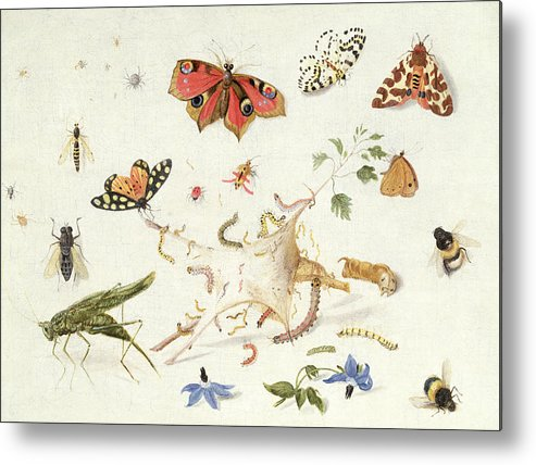 Insect Metal Print featuring the painting Study Of Insects And Flowers by Ferdinand van Kessel