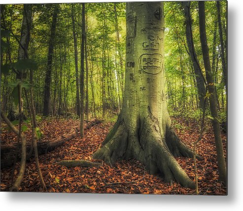 Tree Metal Print featuring the photograph The Giving Tree by Scott Norris