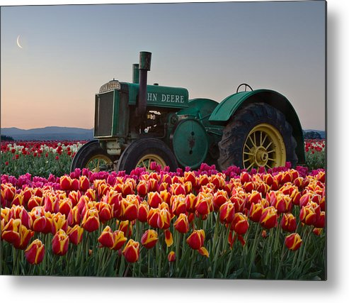 Tractor Photographs Metal Print featuring the photograph Tulip Morning by David Forster