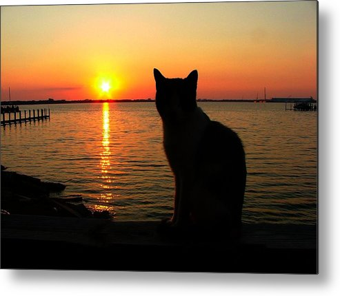 Cats Metal Print featuring the photograph Waiting For The Shrimpers To Come In With Their Catch by Julie Dant
