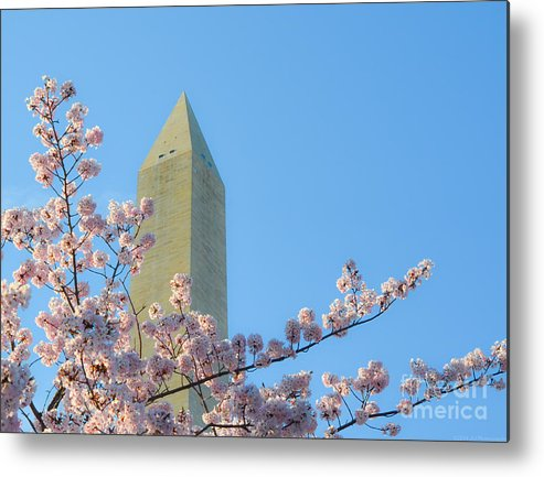 2012 Centennial Celebration Metal Print featuring the photograph Washington Monument With Blossoms by Jeff at JSJ Photography