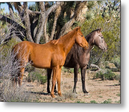 Wild Metal Print featuring the photograph Wild Horses Of Joshua Tree by Wolfgang Hauerken