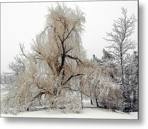 Winter Metal Print featuring the photograph Winter Scene by Kathleen Struckle
