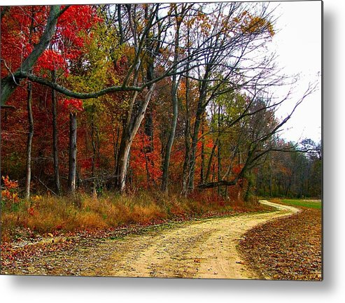 Bottomlands Metal Print featuring the photograph Autumn On Bottomland Road by Julie Dant