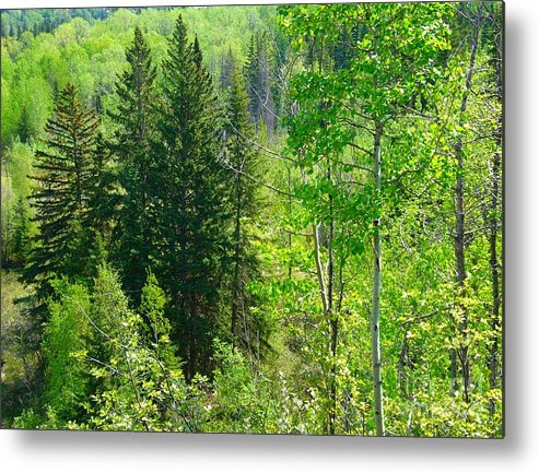 Forests Metal Print featuring the photograph Green by Jim Sauchyn