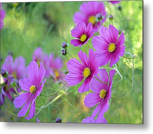 Cosmos Flowers Metal Print featuring the photograph In The Company Of Pink by Fraida Gutovich