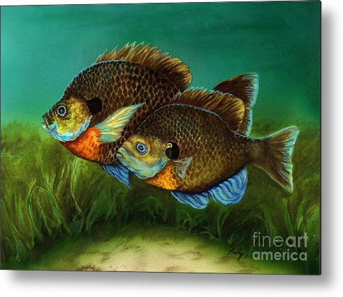 Bluegills Metal Print featuring the painting Pretty Little Panfish by Kathleen Kelly Thompson