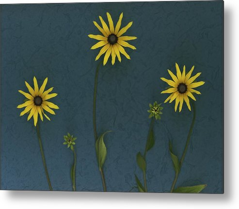 Arranged Metal Print featuring the photograph Three Yellow Flowers by Deddeda