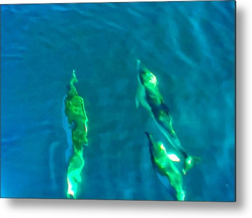 Dolphin Metal Print featuring the photograph Water Fun by Timothy Donahue