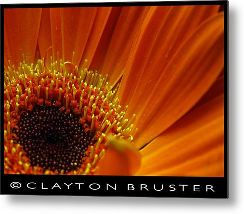 Clay Metal Print featuring the photograph Floral by Clayton Bruster