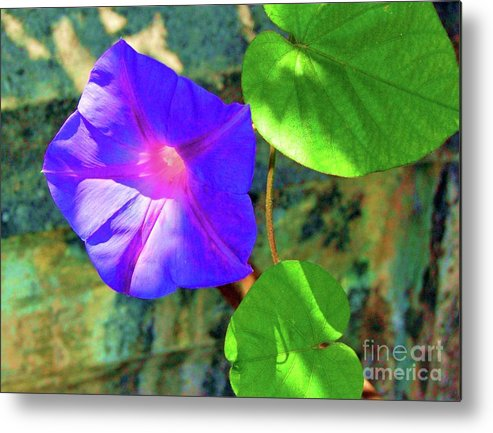 Morning Glory Metal Print featuring the photograph Morning Glory by Debbi Granruth