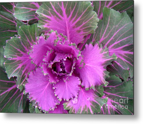 Nature Metal Print featuring the photograph A Study In The Shades Of Spring Four by Lucyna A M Green
