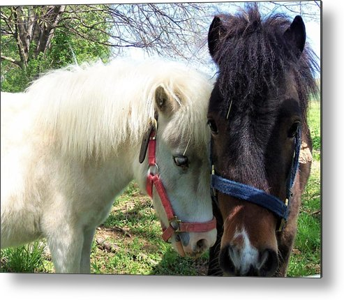 Horses Metal Print featuring the photograph Affection by Cassandra Dice