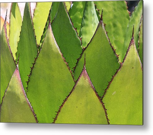 Cactus Metal Print featuring the photograph Agave by Robert Gladwin