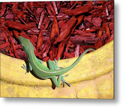 Nature Metal Print featuring the photograph Anole Getting A Better Look by Lucyna A M Green