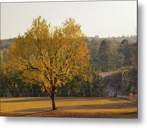 Autumn Metal Print featuring the photograph Autumn Tree At Sunset by Neal Tolbert