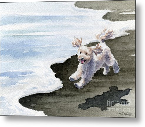 Cockapoo Metal Print featuring the painting Cockapoo At The Beach by David Rogers