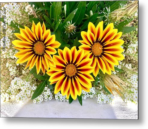Daisies Metal Print featuring the photograph Daisies 3b by Christine McCole