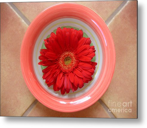 Nature Metal Print featuring the photograph Gerbera Daisy - Bowled On Tile by Lucyna A M Green