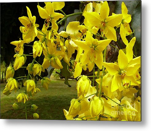 Yellow Shower Tree Metal Print featuring the photograph Golden Shower Tree by James Temple