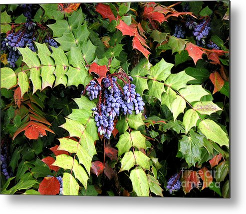 Nature Metal Print featuring the photograph Grapes With Leaves - Too by Lucyna A M Green