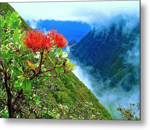 Ohia Lehua Metal Print featuring the photograph Peles Flower by James Temple