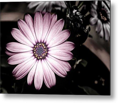 Flower Metal Print featuring the photograph Purple Flower by Al Mueller