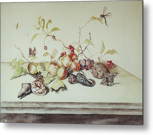 Still Life Fruit Shells Insects Metal Print featuring the painting Sea Shells by Joseph Valencia