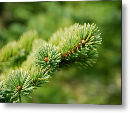 Spring Metal Print featuring the photograph Spring Green by Marilynne Bull