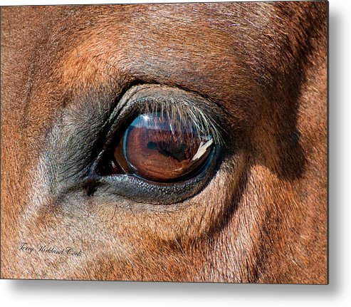 Equine Metal Print featuring the photograph The Equine Eye by Terry Kirkland Cook