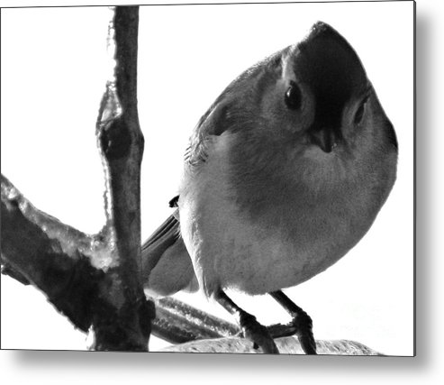 Titmouse Metal Print featuring the photograph Titmouse Eyes by Emily Michaud