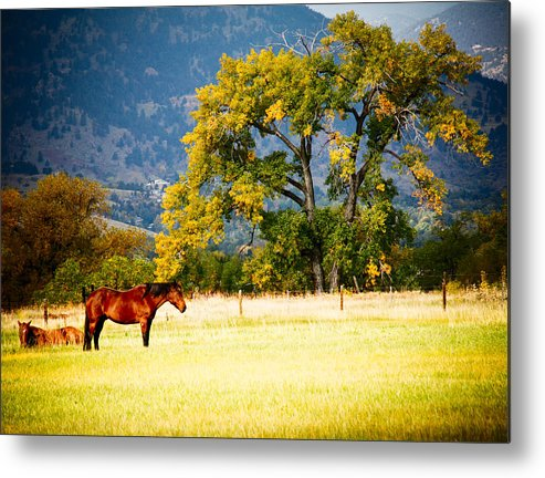 Animal Metal Print featuring the photograph Two Horses by Marilyn Hunt