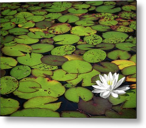Green Metal Print featuring the photograph Water Lily by Elisabeth Van Eyken