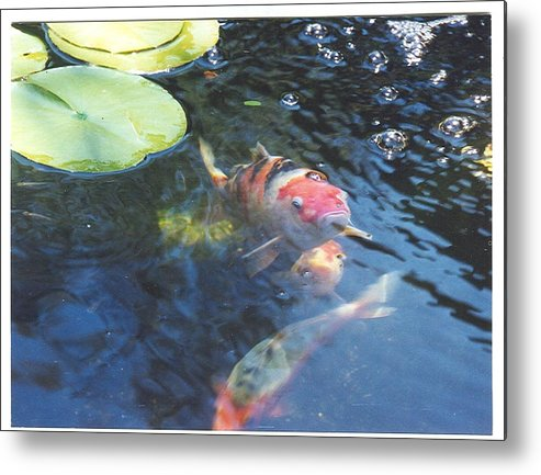 Pondscape Metal Print featuring the photograph Where's Lunch by Laura Johnson
