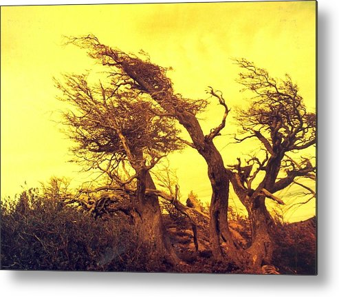 Trees Metal Print featuring the photograph Wicked Trees by Linda Russell