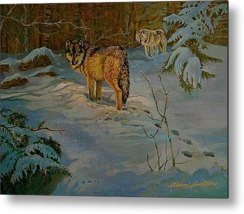 Wolves Metal Print featuring the painting Wolves Of Maine by Alan Carlson