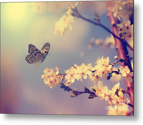 Beauty Metal Print featuring the photograph Vintage Butterfly And Cherry Tree by Dark Moon Pictures