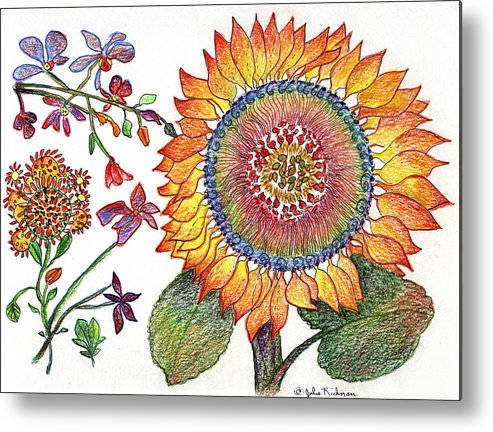 Sunflower Nature Flowers Drawing Julie Richman Metal Print featuring the painting Botanical Flower-46 Sunflower Drawing by Julie Richman