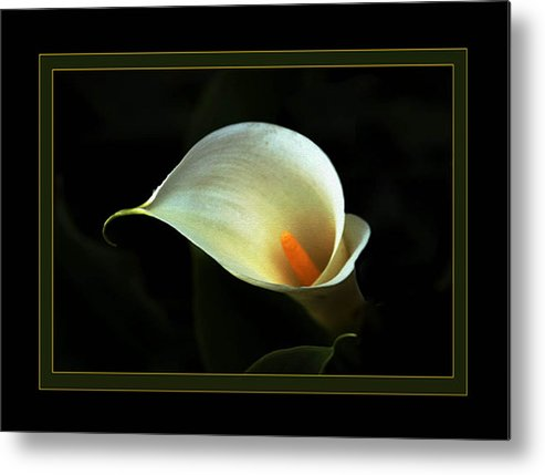 Flower Metal Print featuring the photograph Lily by Richard Gordon