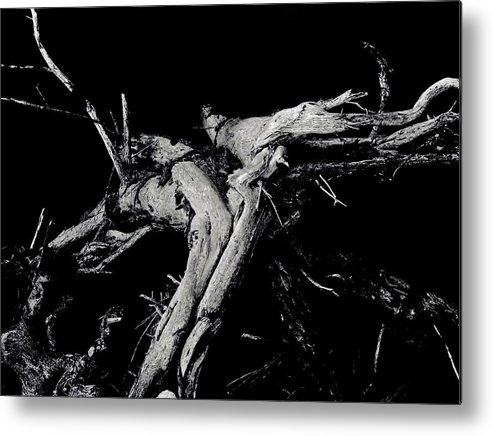 Black And White Metal Print featuring the photograph Roots 2 by Amar Sheow