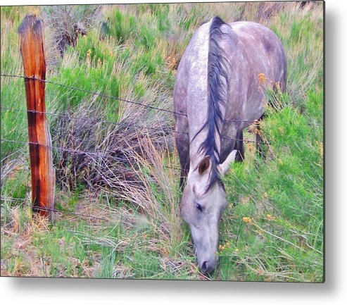 Grass Metal Print featuring the photograph The Grass Is Always Greener by Marilyn Diaz