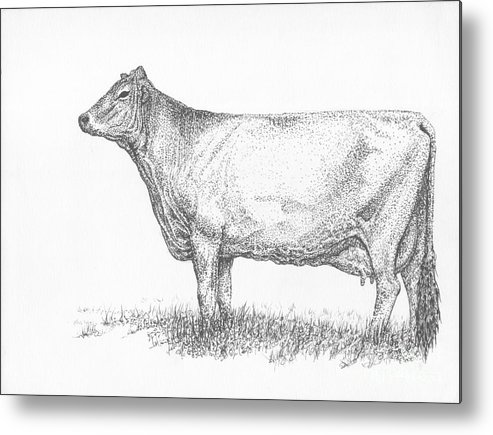 Cattle Metal Print featuring the drawing Brown Swiss Dairy Cow by J E Vincent