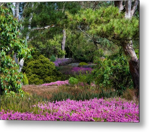 Heather Metal Print featuring the photograph Fields Of Heather by Jordan Blackstone